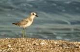 آشنایی با پرندگان بوشهر۲