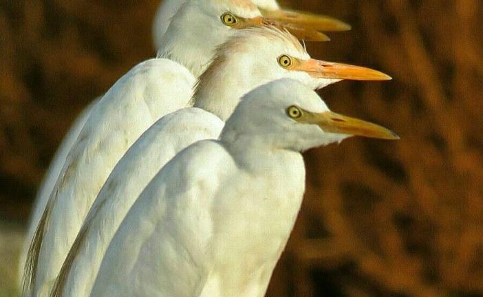 آشنایی با پرندگان بوشهر