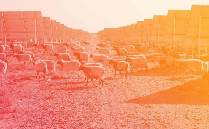 بزرگترین مزرعه خورشیدی جهان