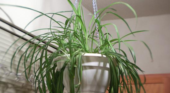 چه گیاهانی برای آپارتمان مناسب است؟