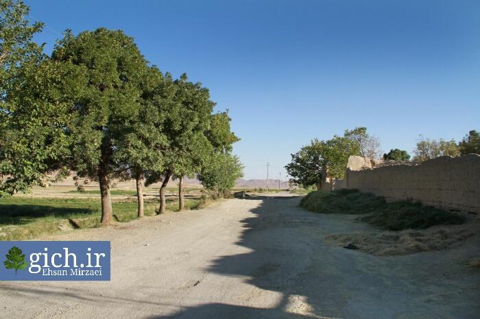 عوارض ورود خودرو به طبیعت درختان روستای گیلی در شهر اراک استان مرکزی