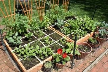 سبزیکاری در خانه
