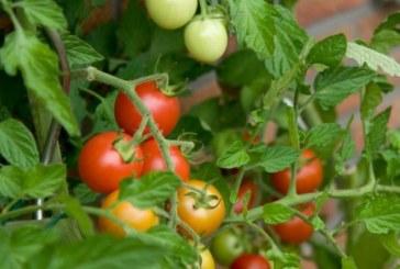 بهترین گیاهان برای پرورش در خانه