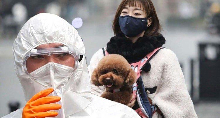 كرونا ویروس بيماری سگ و حیوانات خانگی مجله گیچ