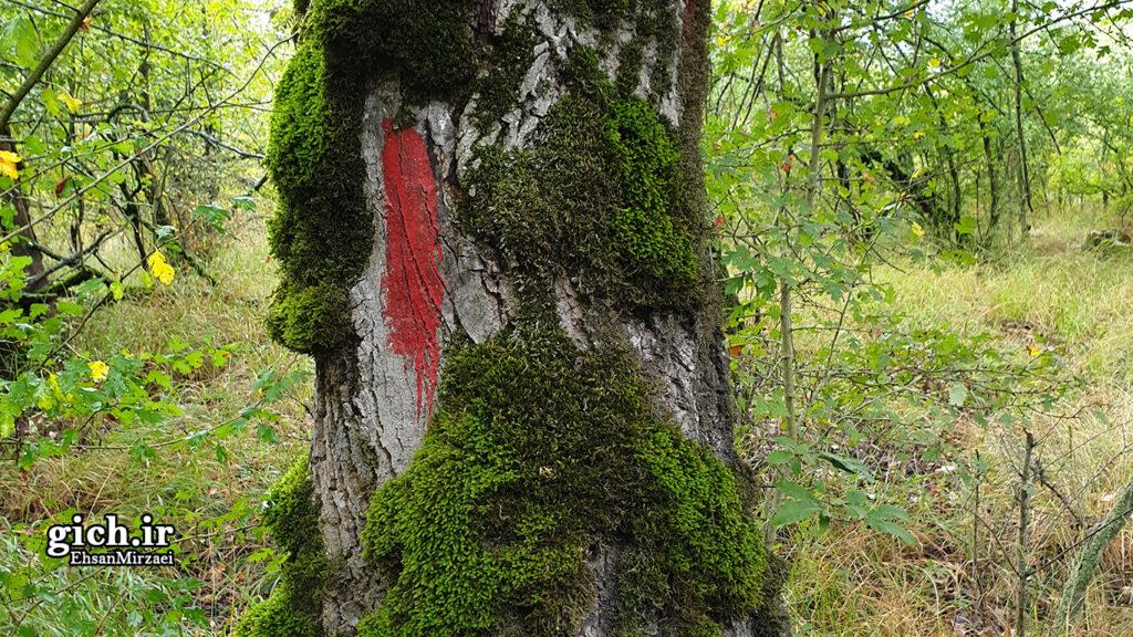 تکنیک های بقا در طبیعت با دست خالی - راه رنگی علامت گذاری شده توسط محیط بانان - مجله گیچ - عکاس احسان میرزائی