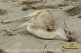 طغیان رودخانهی مُند در بوشهر