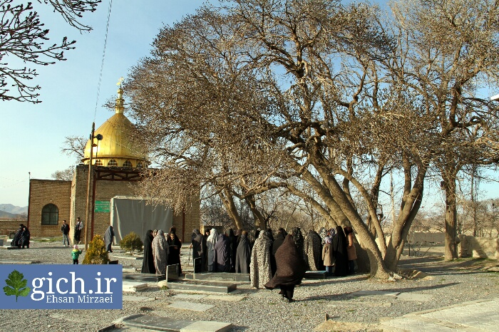 درخت امامزاده روستای گیلی