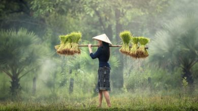 سبک زندگی سبز و راهکارهایی برای حفاظت در برابر بیماری ها