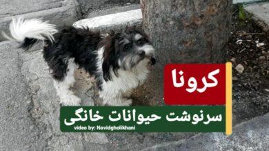 کرونا ویروس و سگ، سرنوشت حیوانات خانگی-مجله گیچ gich.ir (تصویر سگ رها شده در تهران، نوید قلیخانی)