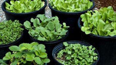 کمپین سبزی نوروز 1400- کشاورزی خانگی - مجله گیچ