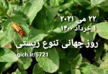 روز جهانی تنوع زیستی سوسک سرباز مجله گیچ
