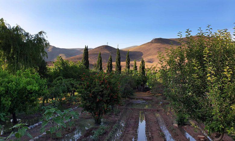 نمای کلی از باغچه ۱۴۰۰