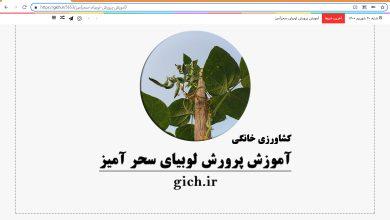 کشاورزی خانگی پرورش لوبیای سحر آمیز احسان میرزائی مجله گیچ
